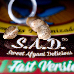 S.A.D. Sweet Afgani Delicious F1 Fast Version®