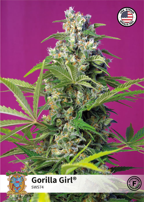 American Cannabis Strains | Sweet Seeds®